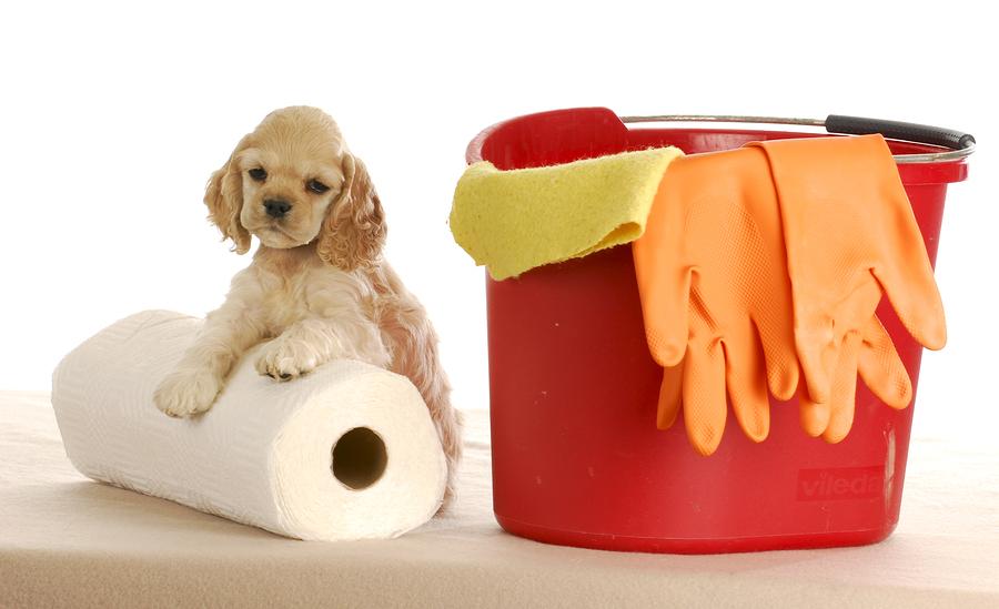 rengöra kiss och bajs efter husdjur
